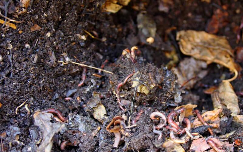 Compost de hojas